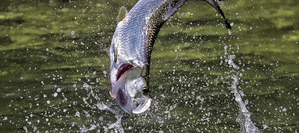 Tarpon fishing on the fly