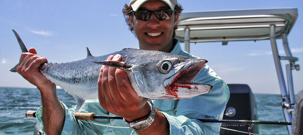 Kingfish on the fly